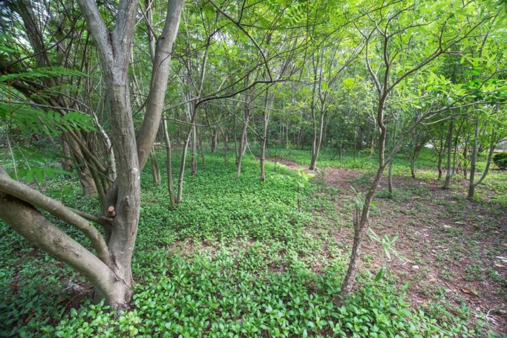Toyota Green Town csr biotope5